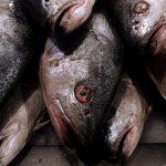 Industria en alerta por proyecto que prohíbe la pesca de arrastre de la merluza