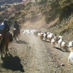 Esforzados colonos de Lonquimay buscan mantener más de 100 años de tradición